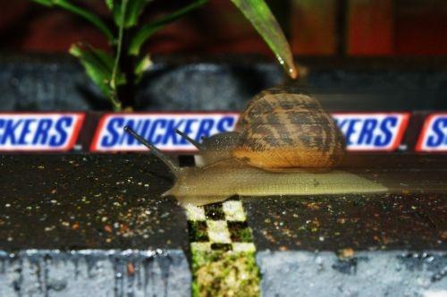 Racing Snails by ShopTilYouDrop
