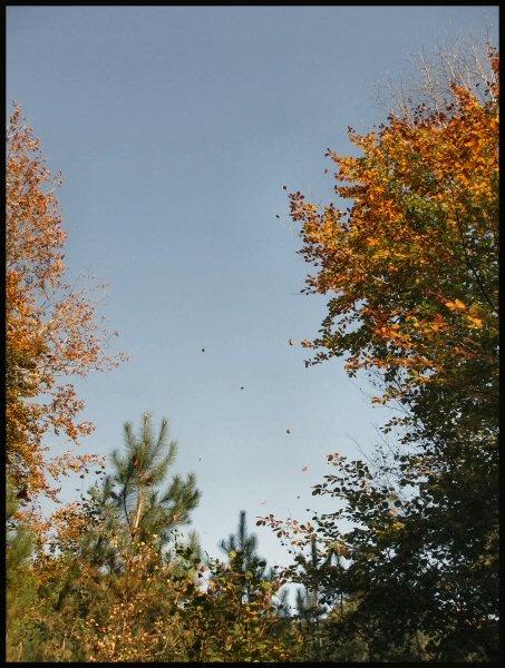 falling leaves by Hay1ey