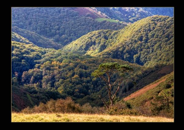 Exmoor by colin63