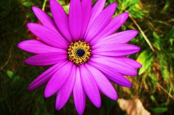 Fleur by RuthTimms