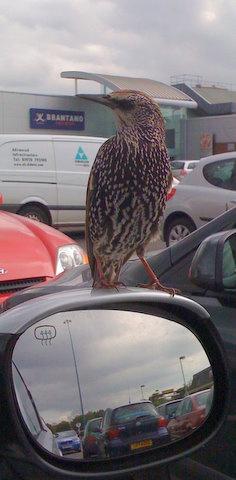 Cheeky bird by shoppingdolly