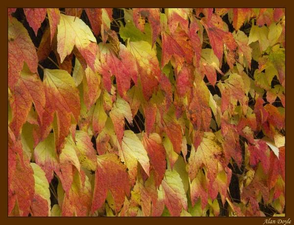 Autumn Crawler by Alan86