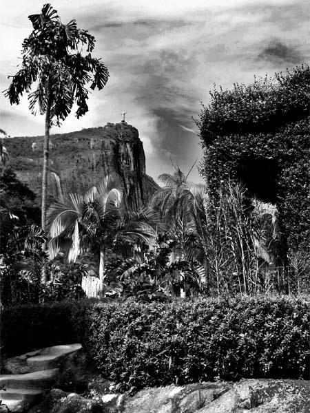 Rio de Janeiro Botanic Garden by eduardobarca