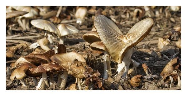 fungi by edavid
