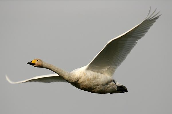 Flypast by amwaluk
