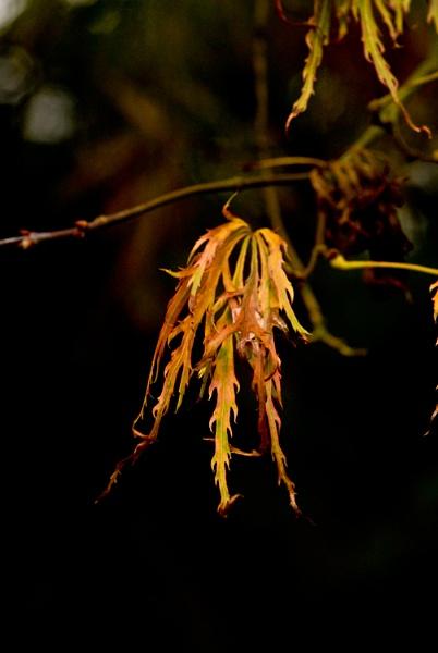 Autumn at Westonbirt by Bryn_Jones