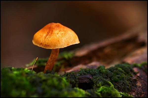 Mushroom III by webjam