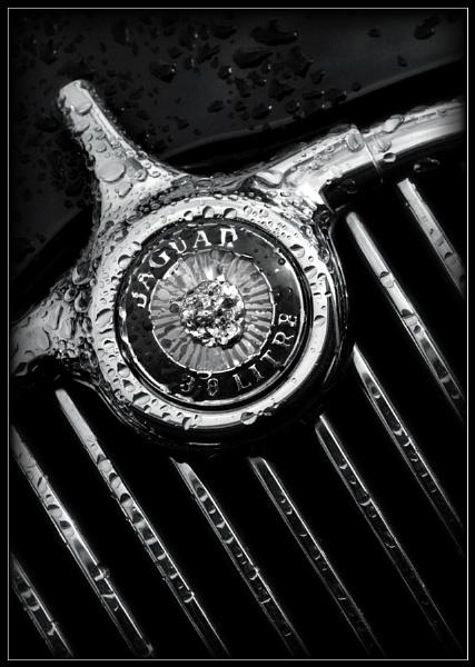 Jaguar Badge B&W by Morpyre