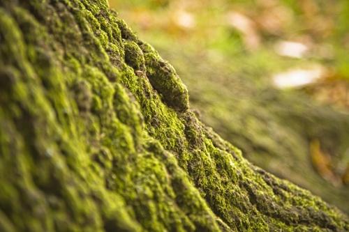 Moss by Skatershrew
