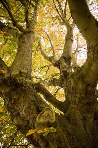 Tree Up by Skatershrew