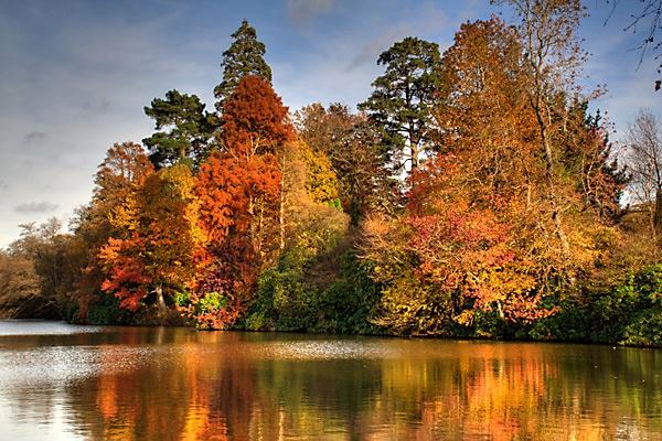 Autumn Glory by Steb