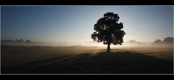 Backlit Tree by Nigel_95