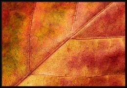 Autumn Colour Space