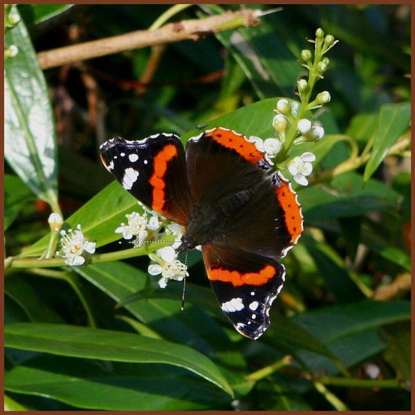 Butterfly by XxPaulxX