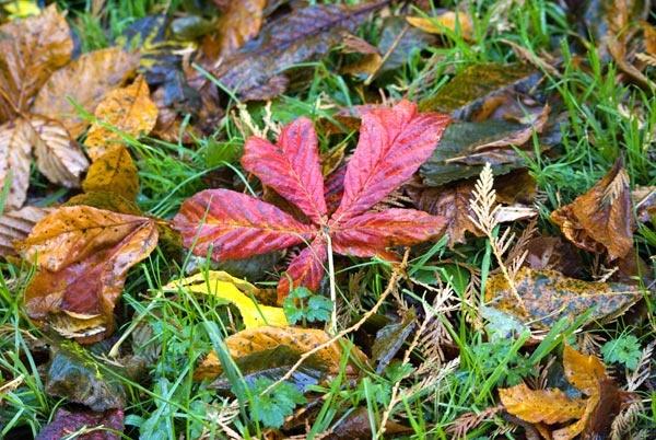 Autumn leaf by AlexisM