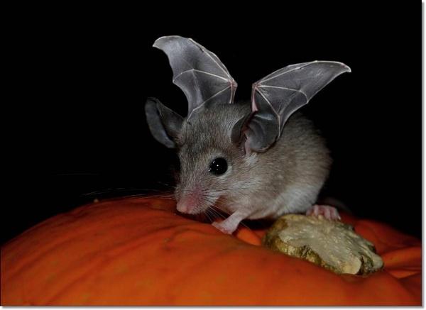 Batmouse by imander