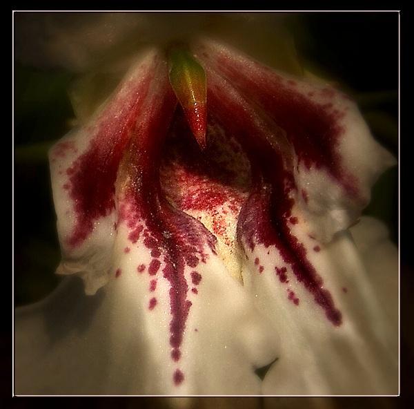 Inverewe Flower by AliMurray