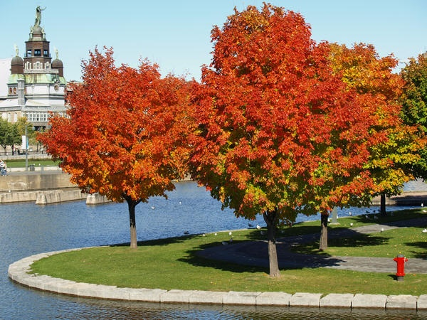 Fall, Montreal by oldhat