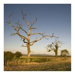 A tree and Bennachie