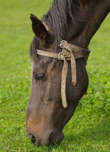 Horse grazing by philstaff