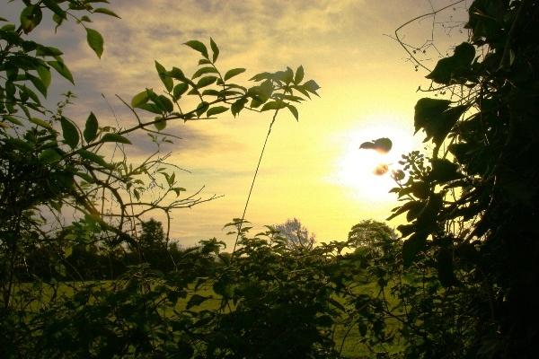 Yellow Morning by Heatherj