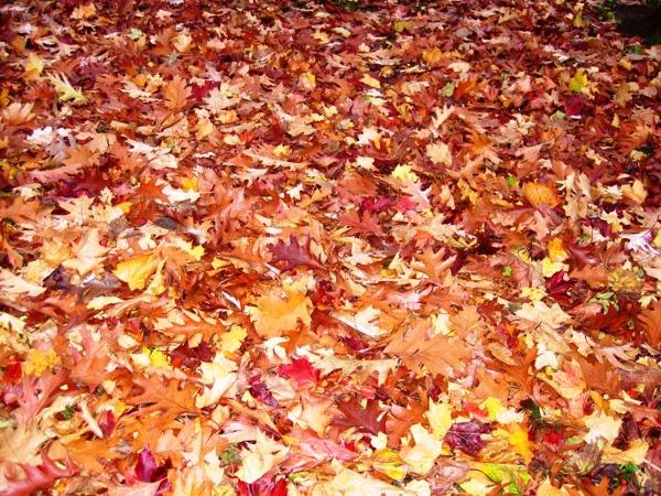 A Leafy Autumn by Heatherj