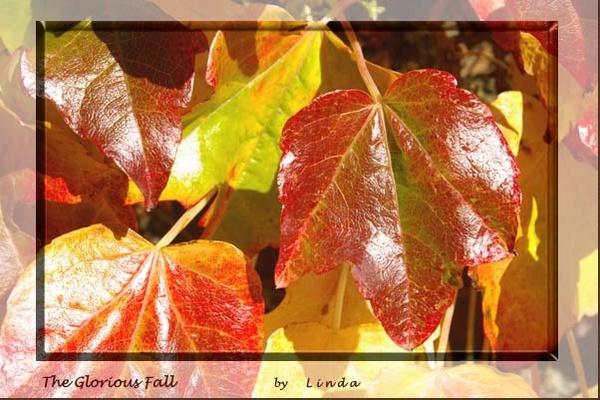 The Glorious Fall by Mynett