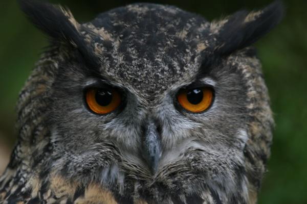 I\'m watching you by Geofferz