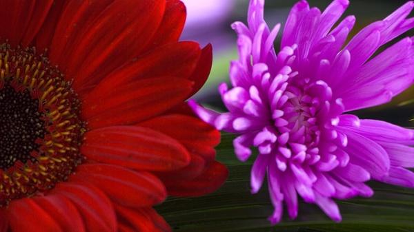 Flower Power by Gingerjam