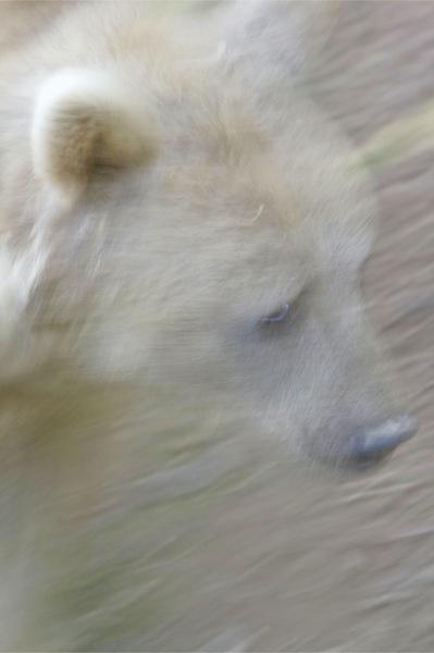 Bear Face by wildatheart