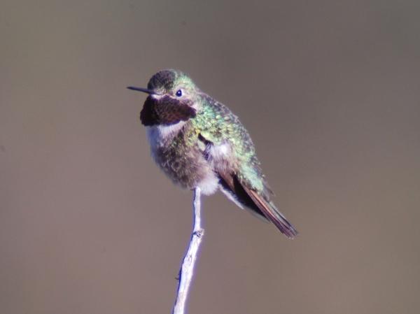 Humming Bird by StuartDavie