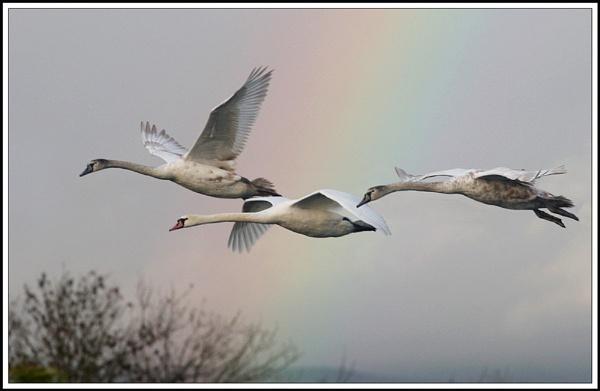 Rainbow Flight by sbphoto