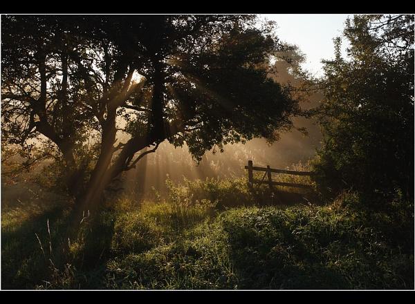Rays by Nigel_95