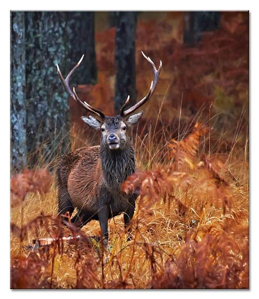 Rain-Deer! by MrsS