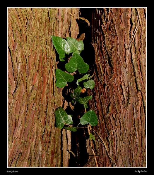 Bark chasm by oldgreyheron