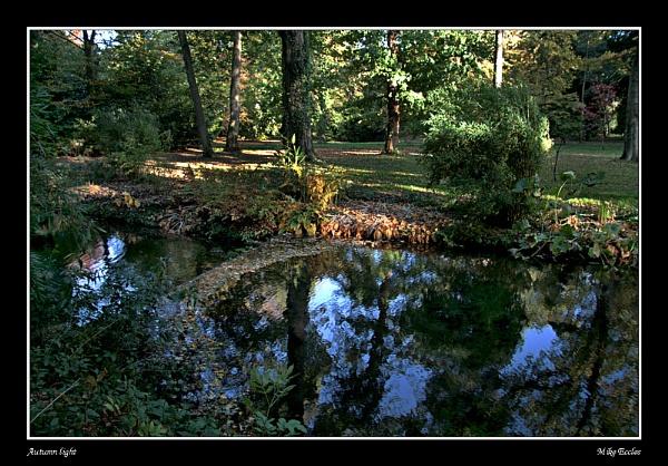 Autumn light by oldgreyheron