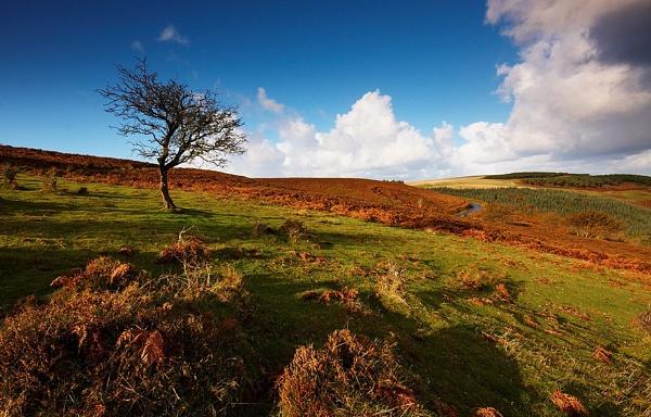 Exmoor Tree by kennyoak
