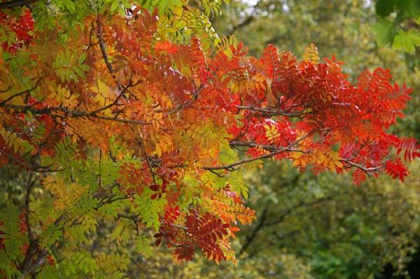 Autumn by Barbaraj