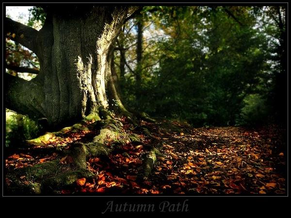 Autumn Path by NikonNovice