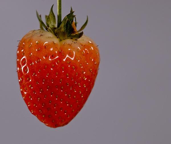 strawbery by joetcat