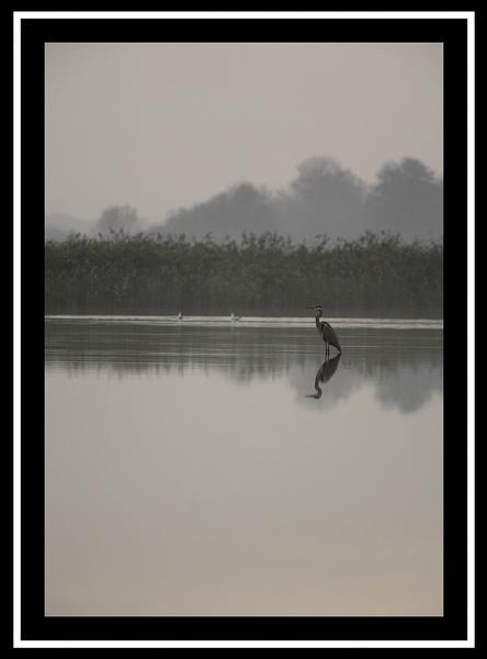 Heron by paulthepunk