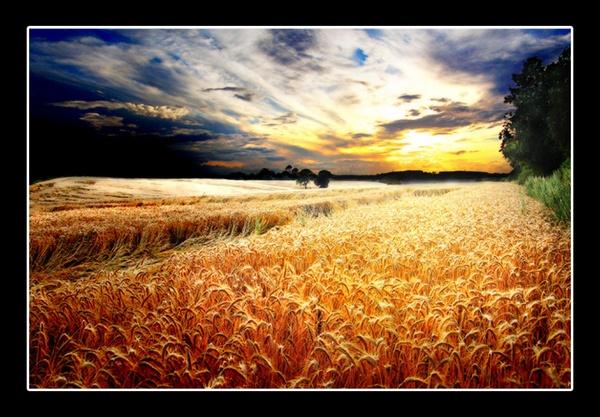 Wheatfire by Merciaman