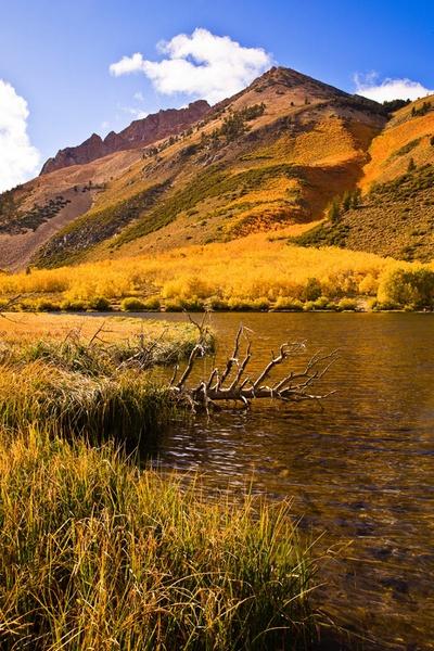 Fall Colours - Eastern Sierra by JGCurry
