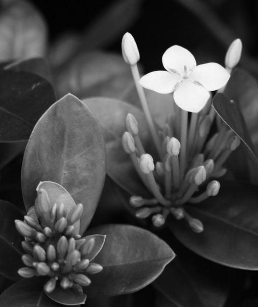 Little flower by crispf