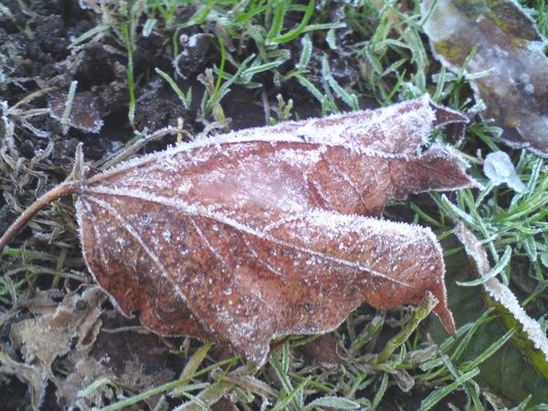 Frosty Leaf by Heatherj