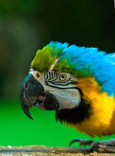 Pretty Polly by Baronred