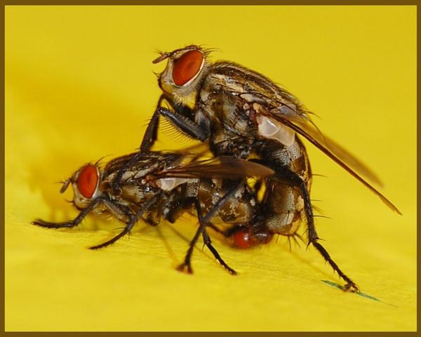 Fly Love by konu