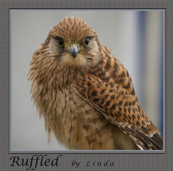 Ruffled by Mynett
