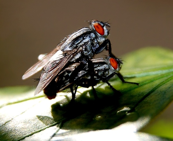 On top!..fly love. by RTDS