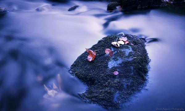 Leaves by David_Gus